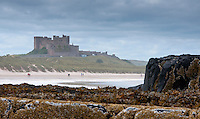 Rocks and seaweed on the beach at Bamburgh with Bamburgh Castle in the background, Northumberland.