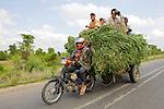 Transporting Grasses