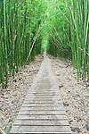 USA, HI, Maui, Haleakala NP, Bamboo Forest on Pipiwai Trail