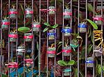 Hongkong, China, Asien, urbane Flora<br />  ***Keine Social_Media Nutzung***<br /> <br /> Engl.: Asia, China, Hong Kong, urban flora, plant<br /> ***No social media use***