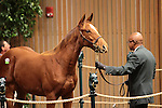Hip 109 Giant Results  Giant's Causeway - Seeking Results colt consigned by Taylor Made sales sold for $260,000..November 06, 2012.
