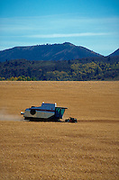 Wheat harvester cutting wheat in field
