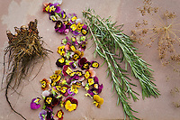 Harvested herbs; roots (Echinacea), flowers (johnny jump-up), leaves (Rosemary), seeds (Dill)