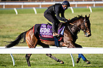 November 4, 2020: Equilateral, trained by trainer Charles Hills, exercises in preparation for the Breeders' Cup Turf Sprint at Keeneland Racetrack in Lexington, Kentucky on November 4, 2020. Jon Durr/Eclipse Sportswire/Breeders Cup