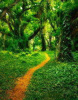 Trail through rainforest. Maui, Hawaii.
