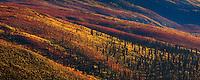 Autmn-colored tundra blanket Tombstone Valley, Yukon Territory.