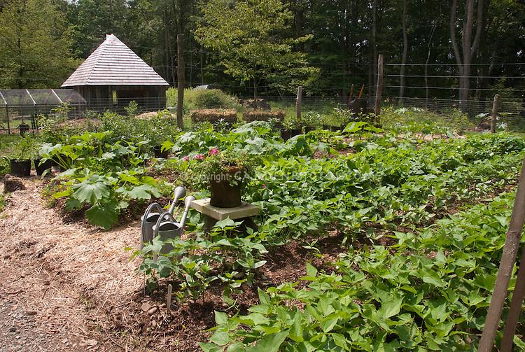 Backyard Farm Garden