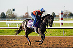 November 5, 2020: Pirate'S Punch, trained by trainer Grant T. Forster, exercises in preparation for the Breeders' Cup Dirt Mile at Keeneland Racetrack in Lexington, Kentucky on November 5, 2020. Dan Heary/Eclipse Sportswire/Breeders Cup/CSM