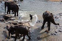 A mahout cleans elephants at the Pinnawala Elephant Orphanage in Sri Lanka.