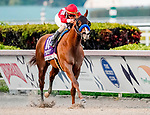January 25, 2020: Mucho Gusto #10, ridden by Irad Ortiz, wins the Pegasus World Cup Invitational during the Pegasus World Cup Invitational at Gulfstream Park Race Track in Hallandale Beach, Florida. Scott Serio/Eclipse Sportswire/CSM