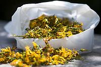 Johanniskraut getrocknet, getrocknete Blüten, Johanniskraut-Blüten, Johanniskrautblüten, Blütentee, Kräutertee, Tee, Heiltee, Johanniskraut, Tüpfel-Johanniskraut, Echtes Johanniskraut, Durchlöchertes Johanniskraut, Tüpfeljohanniskraut, Tüpfel-Hartheu, Hartheu, Hypericum perforatum, St. John´s Wort, Tipton's weed, rosin rose, goatweed, chase-devil, Klamath weed, Le millepertuis perforé, millepertuis commun, millepertuis officinal