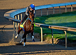 LOUISVILLE, KY - APRIL 30: Combatant, trained by Steve Asmussen, exercises in preparation for the Kentucky Derby at Churchill Downs on April 30, 2018 in Louisville, Kentucky. (Photo by John Voorhees/Eclipse Sportswire/Getty Images)