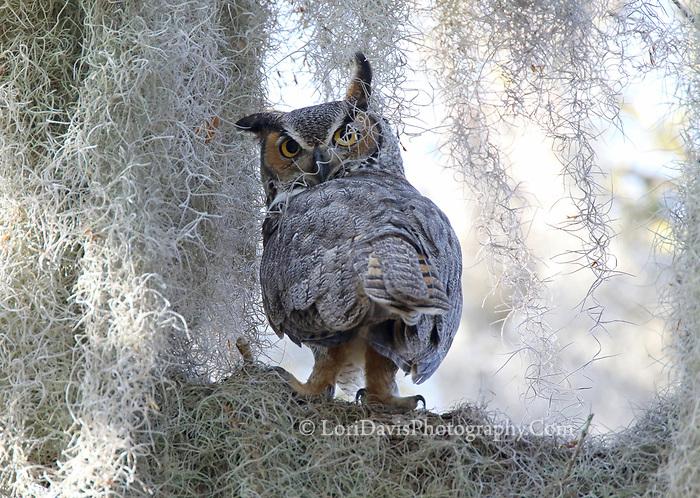 """Owl Scowl""  #B161"