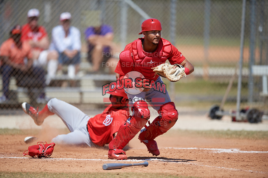 St. Louis Cardinals catcher Ryan McCarvel (12) catches a throw as Juan Soto slides home during a minor league Spring Training game against the Washington Nationals on March 27, 2017 at the Roger Dean Stadium Complex in Jupiter, Florida.  (Mike Janes/Four Seam Images)