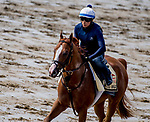 BALTIMORE, MD - MAY 15: Good Magic gallops as he trains for the Preakness at Pimlico Race Course on May 15, 2018 in Baltimore, Maryland (Photo by Scott Serio/Eclipse Sportswire/Getty Images)