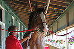 May 16, 2015: Dave Thomas grooms Chuck, one of the Budweiser Clydesdales stabled at Pimlico for Preakness weekend. This group of horses and their handlers are based in Merrimack, NH.  Preakness Day scene at Pimlico Race Course in Baltimore, PA. Joan Fairman Kanes/ESW/CSM
