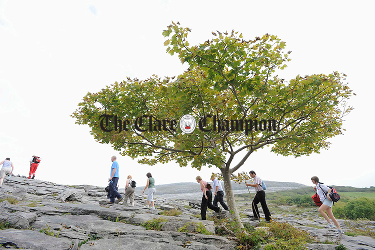 Walkers pass by a windswept tree on the limestone landscape as they head up the hill on the Burren Ramble, held in aid of the Lifeboats. Photograph by John Kelly.
