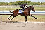 #104Fasig-Tipton Florida Sale,Under Tack Show. Palm Meadows Florida 03-23-2012