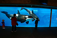 Some onlookers get a close look at a pair of killer whales, Orcinus orca, San Diego, California, USA.