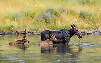So much for waiting 30 minutes after your meal before getting in the water. With the twins on the Henry's Fork. Island Park, Idaho. July 2015.