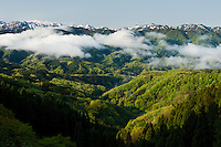 Spring. Snow-capped peaks, the lower slopes a green brocade of leaves. Clouds rising after rain.