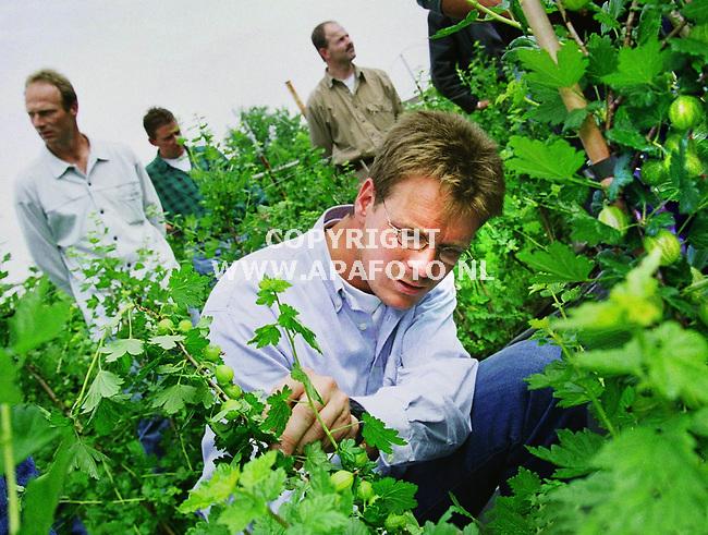 Driel , 240500  foto : Koos Groenewold / APA<br />Excursie kleinfruit , hier belangstellenden bij kruisbessen . De heer op de foto kijkt zorgelijk omdat het fruit veel last heeft van meeldauw.