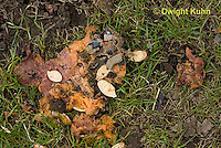 DC10-513z  Pumpkin Fruit and Seeds decaying to soil