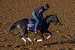 November 3, 2020: Dirty Dangle, trained by trainer Mark E. Casse, exercises in preparation for the Breeders' Cup Juvenile Turf Sprint at Keeneland Racetrack in Lexington, Kentucky on November 3, 2020. John Voorhees/Eclipse Sportswire/Breeders Cup/CSM