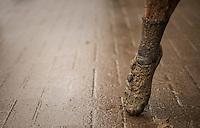 muddy post-finish ballet pauze<br /> #pointes<br /> <br /> elite men's race<br /> Krawatencross Lille 2017
