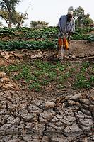 NIGER, Sahel, Zinder, village Baban Tapki, food security project by Caritas, irrigation of vegetable garden from water well /NIGER Zinder, Projekte Ernaehrungssicherung im Dorf Baban Tapki, Bewaesserung eines Gemuesegartens aus einem Brunnen