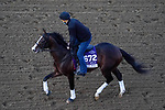 November 5, 2020: War Of Will, trained by trainer Mark E. Casse, exercises in preparation for the Breeders' Cup Dirt Mile at Keeneland Racetrack in Lexington, Kentucky on November 5, 2020. John Voorhees/Eclipse Sportswire/Breeders Cup/CSM