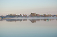 Tree's, fog and water combine for a magical spring moment near Appalatchacola Florida on the intercoastal waterway