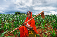 AWright_Tanz_008638.jpg<br /> Tanzania<br /> Helena Maroda works in a Morogoro cornfield that serves as a demonstration plot to teach other how to grow corn more successfully. Eight other women collectively work the roughly eight acres of land.