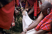 Lolgorian, Kenya. Siria Maasai; stuffing the nose of the sacrificial bull before slaughter for Eunoto coming of age ceremony.