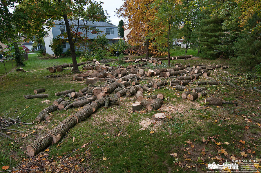 Remnants from clearing dead ash trees litter the back yard of a home in Westerville, Ohio. the trees were killed by the ash borer beetle, an invasive species destroying ash tree forests throughout the Midwest.