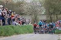 Peloton up the Gulpenerberg.<br /> <br /> 53th Amstel Gold Race (1.UWT)<br /> 1 Day Race: Maastricht > Berg en Terblijt (263km)