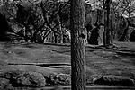 """Twig""<br /> Girafe Enclosure<br /> Philadelphia Zoo<br /> Philadelphia, PA<br /> From the ""Captivity"" series<br /> © Thierry Gourjon-Bieltvedt"