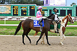 January 16, 2016: Flashlight (IRE) with Miguel Mena up in the Col. E.R. Bradley Handicap race at the Fairgrounds race course in New Orleans Louisiana. Steve Dalmado/ESW/CSM