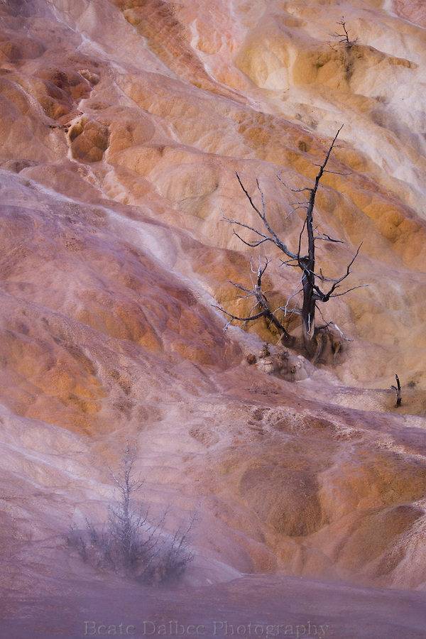 Mammoth hot springs abstract, Yellowstone National Park