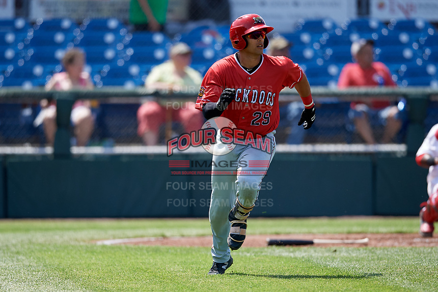 Batavia Muckdogs catcher Igor Baez (29) runs to first base during a game against the Auburn Doubledays on June 17, 2018 at Falcon Park in Auburn, New York.  Auburn defeated Batavia 10-6.  (Mike Janes/Four Seam Images)