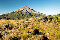 Morning light on alpine tussock field with Taranaki, Mount Egmont in background, Egmont National Park, North Island, New Zealand, NZ