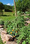 Pleasant Valley garden, pea trellis