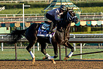 ARCADIA, CA  OCTOBER 30:  Breeders' Cup Dirt Mile entrant Coal Front, trained by Todd A. Pletcher,  exercises in preparation for the Breeders' Cup World Championships at Santa Anita Park in Arcadia, California on October 30, 2019. (Photo by Casey Phillips/Eclipse Sportswire/CSM)