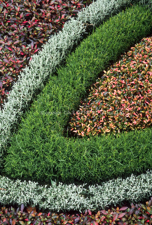 Dwarf germander, barberry & santolina Knot garden detail from the herb garden parterre, creating visual effect with patterns of planting design