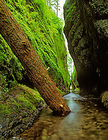 Oneonta Gorge, Oregon.