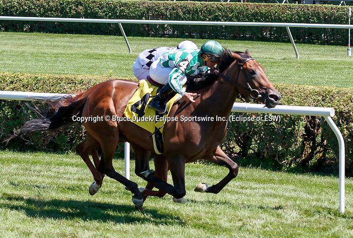 War Cabinet (no. 4) wins Race 4 July 21 at Saratoga Race Course, Saratoga Springs, NY.  The winner, ridden by Javier Castellano and trained by Claude McGaughey, III, prevailed by a neck over Beau Belle (no. 8).  (Bruce Dudek/Eclipse Sportswire)