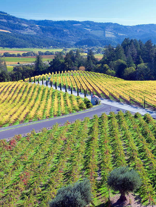 View of vineyards in front of Castello di Amorosa. Napa Valley, California. Property relased