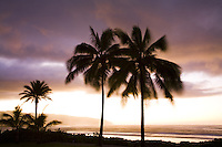Palm trees against a sunset at Alii Beach Park in Haleiwa