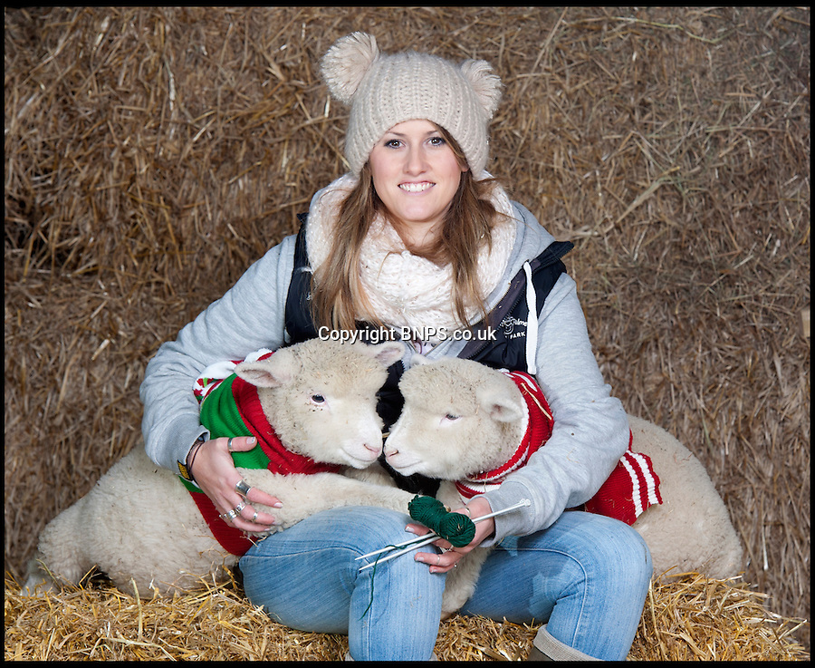 BNPS.co.uk (01202) 558833<br /> Picture: LauraJones/BNPS<br /> <br /> Farm park assistant Emma Shaw (28) knits a jumper for the Poll Dorset lambs.<br /> <br /> These cosy lambs are getting into the festive spirit after being given their own knitted Christmas jumpers to wear.<br /> <br /> Holly and Ivy are Dorset Poll sheep which are the only breed to be born year round.<br /> <br /> The pair, the last of the year to arrive at an activity farm, were let outdoors with the rest of the lambs but staff brought them back inside when they noticed they were shivering.<br /> <br /> And to give them extra insulation, they have knitted Holly and Ivy two seasonal sweaters to wear at night.<br /> <br /> The woolly jumpers have been made to match their names, with red wool for Holly and a bright green colour for Ivy.<br /> <br /> The two-month-old lambs wear the jumpers during the chilly nights at Farmer Palmers Farm Park near Poole, Dorset.