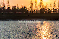 As the sun slides to the horizon, a boat with eight manning oars facing one way and one facing them.  San Leandro Bay near the Oakland International Airport